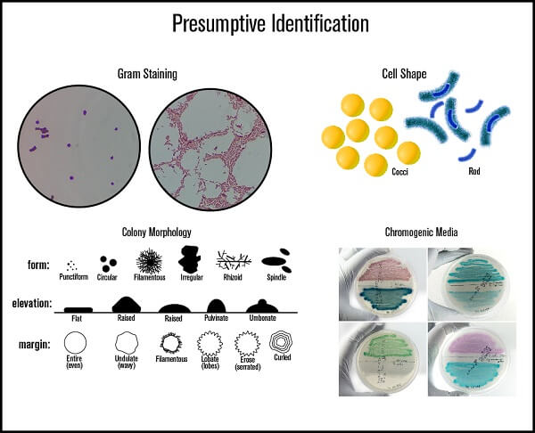 Presumptive Identification of Microbes in Food Grade Air