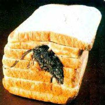 Real or Fake?  Either way this mouse is bread!  I mean dead.