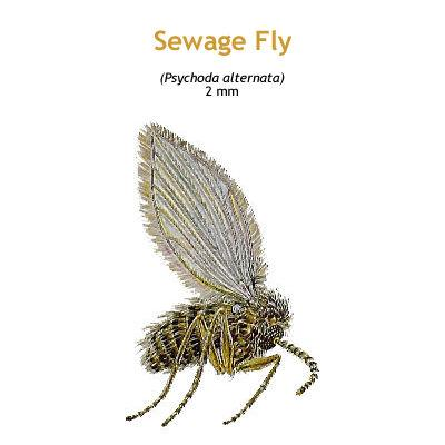 b_sewage_fly.jpg