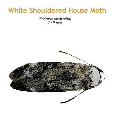 b_warehouse_moth.jpg