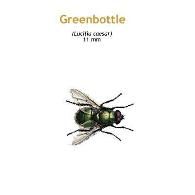 b_greenbottle.jpg