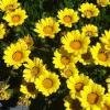 List of Organic Ingredients... - last post by Aliali