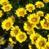 List of Organic Ingredients (Australia and NZ) - last post by Aliali